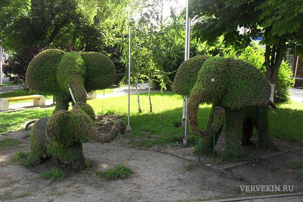 150-anapa-zelenye-slony