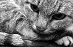 Дворовые кошки и коты