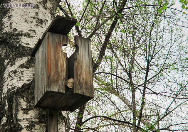 Скворечник на дереве за снесенным домом на улице Ленинградской