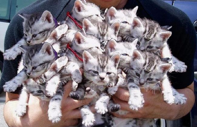 Международный День кошек и котов