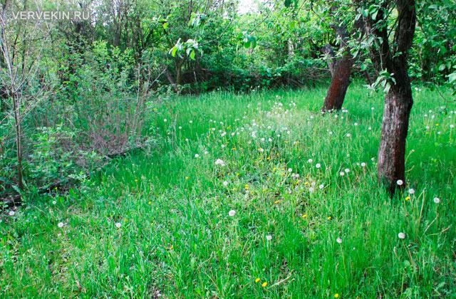 Результат работы триммера Bosch EasyGrassCut: трава до покоса
