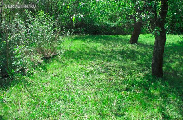 Результат работы триммера Bosch EasyGrassCut: трава после покоса