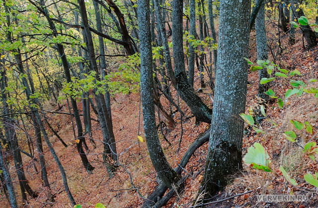 Кривоборье: лес, растущий на пологом склоне